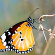 Butterfly — Stock Photo #9652766