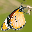 Butterfly — Stock Photo #9652771
