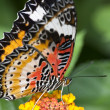 Butterfly — Stock Photo #9653023
