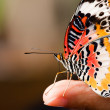 Butterfly — Stock Photo #9653989