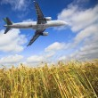 Stock Photo: Airplane and wheat field