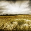 Wheaten field — Stock Photo #9655555