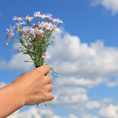 Flower in hand — Stock Photo