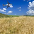 Airplane and wheat field - Stock Photo