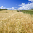 Wheaten field — Stock Photo #9661308