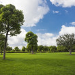 The tree of a park outdoor. — Stock Photo