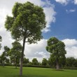 The tree of a park outdoor. — 图库照片