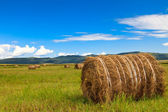 Meadow of Inner Mongolia — Stock Photo
