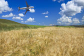 Airplane and wheat field — Stock Photo