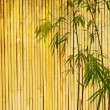 Bamboo on old grunge antique paper texture — Stock Photo #7966433