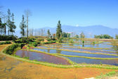 Rice terraces of yuanyang in yunnan, china — Stock Photo