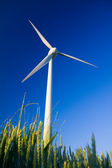 Windmill and crop — Stock Photo