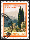 Postage stamp Italy 1966 Cypresses, Cupressus Sempervirens — Stock Photo