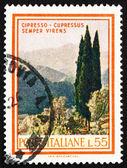 切手イタリア 1966年糸杉、カプレサスセンパーヴァイレンス — ストック写真