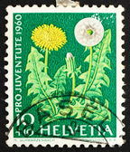 Postage stamp Switzerland 1960 Dandelion, Flowering Plant — Stock Photo