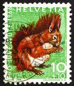 邮票瑞士 1966年红松鼠松鼠 — 图库照片