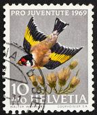 Postage stamp Switzerland 1969 European Goldfinch, Carduelis Car — Stock Photo