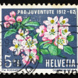 Stock Photo: Postage stamp Switzerland 1962 Apple Blossoms, Apple Tree, Malus