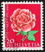 Postage stamp Switzerland 1964 Rose, Rosa, Flowering Plant — Stock Photo