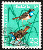Postage stamp Switzerland 1971 White-spotted Bluethroats, Luscin — Foto de Stock