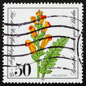 Postage stamp Germany 1981 Moor-King Lousewort, Pedicularis Scep — Stock Photo
