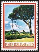 Почтовая марка Италии 1966 зонтик сосны, кедра, pinus pinea — Стоковое фото