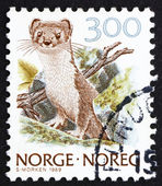 Postage stamp Norway 1989 Ermine, Stoat, Mustela Erminea — Stock Photo