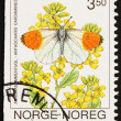 Postage stamp Norway 1993 Orange Tip Butterfly, Anthocaris Carda — Lizenzfreies Foto