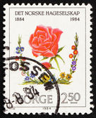 Postage stamp Norway 1984 Red Rose — Stock Photo