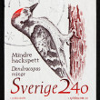 Stock Photo: Postage stamp Sweden 1989 Woodpecker, Dendrocopos Minor