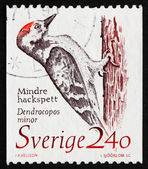 Postage stamp Sweden 1989 Woodpecker, Dendrocopos Minor — Stock Photo