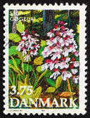 Postage stamp Denmark 1990 Purple Orchis — Stock Photo