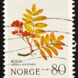 Stock Photo: Postage stamp Norway 1980 EuropeRowan, Mountain Flower