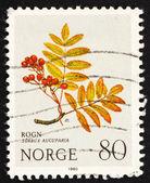 Postzegel noorwegen 1980 europese rowan, berg bloem — Stockfoto