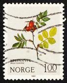 Postage stamp Norway 1980 Dog Rose, Mountain Flower — Stock Photo