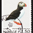 Stock Photo: Postage stamp Norway 1981 Atlantic Puffin, Bird