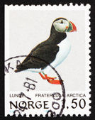 Postage stamp Norway 1981 Atlantic Puffin, Bird — Stock Photo