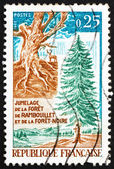 Postage stamp France 1968 Gnarled Trunk and Fir Tree — Stock Photo