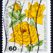 Postage stamp Germany 1982 TeRose Hybrid, flower — Stock Photo #9398670