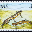 Postage stamp Ireland 1995 Smooth Newt — Stock Photo