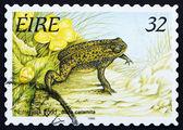Postage stamp Ireland 1995 Natterjack Toad, Frog — Stock Photo