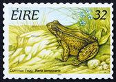Postage stamp Ireland 1995 Common Frog, Frog — Stock Photo