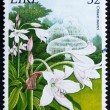 Stock Photo: Postage stamp Ireland 1995 Natal Lily, Crinum Moorei