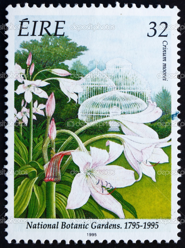 IRELAND - CIRCA 1995: a stamp printed in the Ireland shows Natal Lily, Crinum Moorei, Bicentennial of National Botanic Garden, circa 1995 — Stock fotografie #9487719