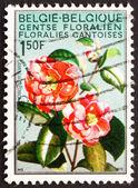 邮票比利时 1967年茶花、 花 — 图库照片