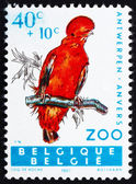 Postage stamp Belgium 1962 Andean Cock of the Rock, Bird — Stock Photo