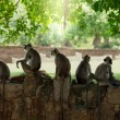 Monkey on Sri Lanka — Stock Photo #10130338