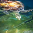 Turtle — Stock Photo #10130811
