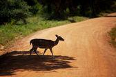 Spoty jelenia — Zdjęcie stockowe