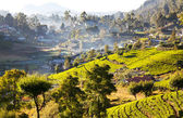Sri Lanka landscapes — Stock Photo